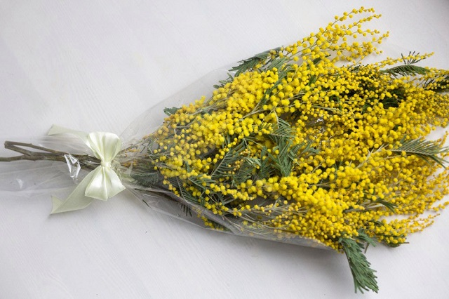 Цветы мимоза недорого где купить оптом, букет астры мастер